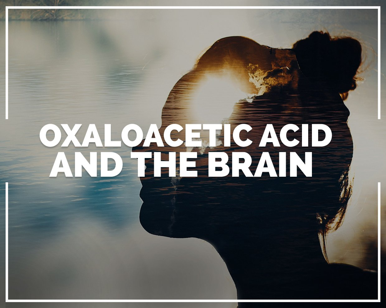 Oxaloacetic acid and the brain